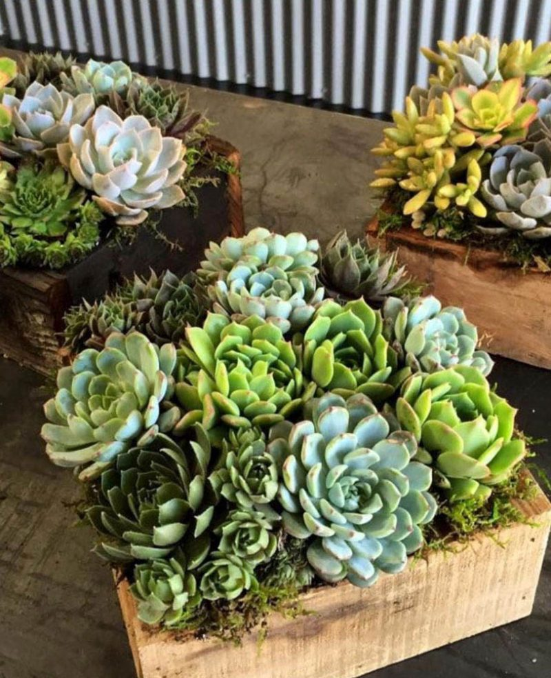 annies green thumb boxes