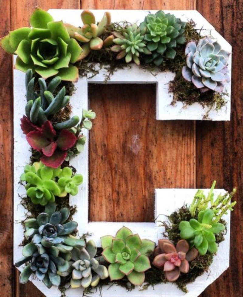 annes-green-thumb-succulantboxes